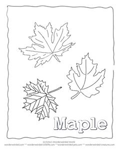 Maple Leaf Coloring Page, Our Leaf Coloring Page