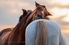 Most Beautiful Animals, Beautiful Horses, Beautiful Creatures, Horse Love, Horse Girl, Farm Animals, Cute Animals, Types Of Horses, All About Horses