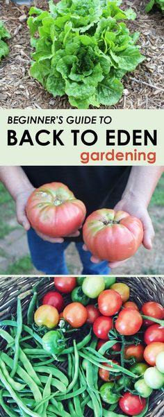 Vegetable Gardening For Beginners Getting started with the back to eden gardening method is easy! Find out exactly how to start a back to eden garden bed and enjoy this no weeding and no watering garden method that yields a lot of produce! Garden Types, Vegetable Garden For Beginners, Gardening For Beginners, Organic Vegetables, Growing Vegetables, Organic Nutrients, Garden Soil, Garden Beds, Garden Of Eden