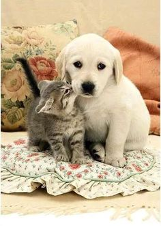 Foto Cat And Dog