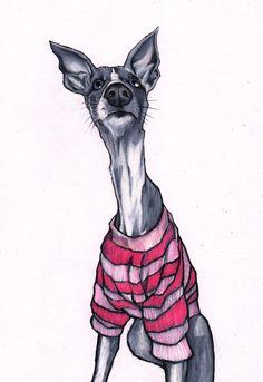 Edie Whippet. Colour pencil drawing. https://www.etsy.com/shop/JimGriffithsArt?ref=hdr_shop_menu