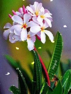 Прекрасные цветы с бабочками