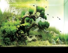 nature aquarium - Google Search