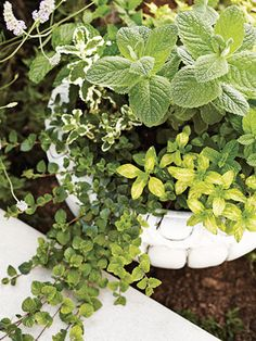 Grow fresh herbs on your #patio and serve them at your next outdoor get-together! #OutdoorDecor #PatioDecorations #plants #gardening