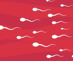 5 Natural Ways to Increase Sperm Motility - Infertility.Answers.com