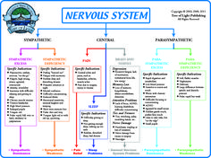 drug effects on autonomic nervous system - - Yahoo Image Search Results Nervous System Anatomy, Human Nervous System, Autonomic Nervous System, Central Nervous System, Nervous System Diagram, Medical Facts, Medical Information, Psychology Notes, Craniosacral Therapy