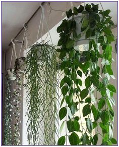 top hanging plants tips! - Garden Easy - 20 top hanging plants tips! 20 top hanging plants tips! # hanging plants The post 20 top han -