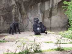 "Gorillas: ""Is this a government project or what?"""