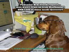 @ www.fureverdachshundrescue.org.   Check out more of our funny captions on our facebook page.
