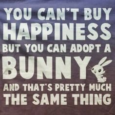 You can't buy happiness, but you can adopt a bunny, and that's pretty much the same thing Funny Bunnies, Cute Bunny, Bunny Meme, House Rabbit, Bunny Rabbit, Adopt A Bunny, Bunny Quotes, Giant Bunny, Rabbit Hutches