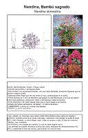 Fichas de árboles, arbustos y plantas trepadoras - Diseño Paisajista - arq + recursos
