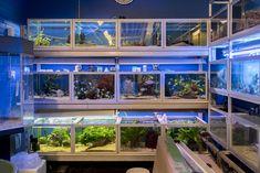 Akvarielagret på Levande interiör