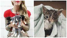 Meet Hannah Shaw, neonatal kitten warrior