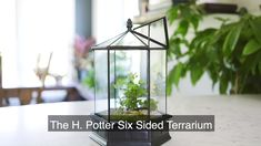 H Potter Glass Terrarium For Plants Wardian Case Terrarium For Sale, Large Terrarium, Succulent Terrarium, Succulent Plants, Terrariums, Planting Succulents, Potted Plants, Good Environment, Healthy Environment