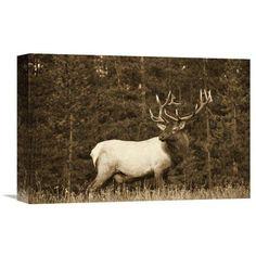 Global Gallery Elk Or Wapiti Male Portrait North America - Sepia Wall Art - GCS-450500-3040-142