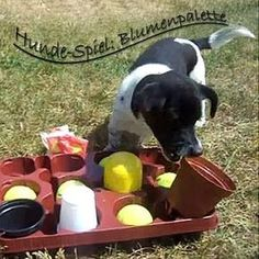 Blumenkisten Spiel (Suchspiel für den Hund)