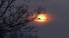 La nebbia scrive al sole il sudarci che ha impregnato il gusto. E il sole scrive a queste acque dell'amarci, i solchi del nuotarci di cielo imbevuto. Bdìn #poesia <3