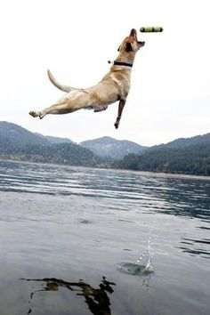 Yes, that is a flying dog...hahahaha. but really that is amazing dogs can jump like that
