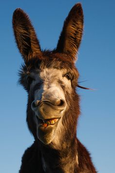 The similarities are uncanny. Really looks like Buttons at Brookfield. This donkey is so precious.
