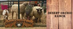 Desert Orchid Ranch Petting Zoo is a Petting Zoo in Scottsdale, AZ. Give us a call today at # (480) 470-5969 #PettingZoo #MobilePettingZoo #AnimalFarmZoo #FarmPettingZoo #RentalPettingZoo #BirthdayPartyPettingZoo #KidsPartyPettingZoo #SchoolPettingZoo #ChildrensEntertainment #EventPettingZoo #ChurchPettingZoo #FestivalPettingZoo #Scottsdale #Scottsdale85262 #Arizona