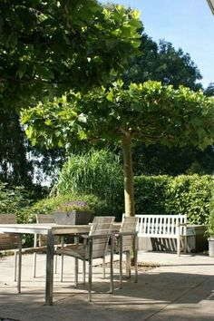 De dakplatanen zorgen voor een fijne schaduw boven het terras tuin pinterest wijnstokken for Schaduw een terras