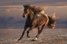 Galloping Chocolate Beauty #horse