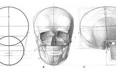 череп конструктивный рисунок - Поиск в Google