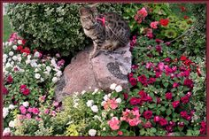 Bengal Cat Lucy Law sitting on her rock surrounding by flowers.