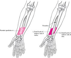 Foot And Ankle Flash Cards additionally Humerus likewise 1948665 Overview furthermore Back moreover 2007 07 01 archive. on bones of the anterior and posterior body