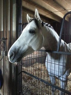 GOOD LUCK & Come Home Safe @Jubacolt @saratogatrack @Centennial_Farm    #GoJuba#Go