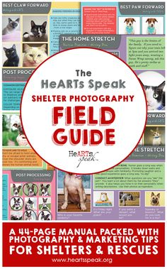 The HeARTs Speak Shelter Photography Field Guide is a go-to manual jam-packed with photography tips, social media wisdom, and big-picture inspiration to help shelters more effectively market their adoptable pets. Shelter Dogs, Animal Shelter, Animal Rescue, Rescue Dogs, Shelters, Pet Photography Tips, Photography Logos, Animal Photography, Field Guide