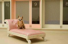 Sillones Para Perros y Gatos Somos SLEEPETS™ La Marca que consiente a tu mascota. Contáctenos y cotice con nosotros! http://sleepets.wix.com/sleepets