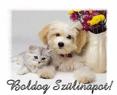 Dogs cats Gifs images and Graphics. Dogs cats Pictures and Photos. Cute Kittens, Cute Cats And Dogs, Cool Pets, Cute Animal Pictures, Dog Pictures, Animals Beautiful, Cute Animals, Animal Fun, Art Carte