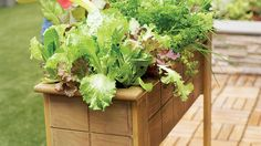 On the patio | On a driveway, atop a doghouse, up a wall—here's how to garden in small and unusual spaces
