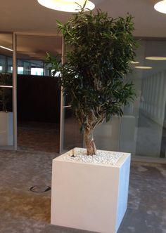 Büropflanze für die frische Luft #office #furniture #workspace #interior #design #plants #air