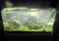 Alga tájékoztató, alga elleni védekezés Green Aqua Aquarium, Seaweed, Goldfish Bowl, Aquarium Fish Tank, Aquarius, Fish Tank