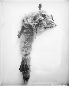 Головной убор из волчьей шкуры (кожи?). Носил Wiyaka Wanzila One Feather. Сиу, 1911 год.