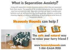 Responsible traded treat dog separation anxiety visit this page You Come And Go, Dog Separation Anxiety, Signs Of Stress, Dog Training Classes, Behavioral Issues, Medical Conditions, New Tricks, Anxious
