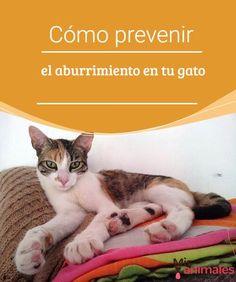 Cómo prevenir el aburrimiento en tu gato Mientras que el cuidador está lejos el gato puede pasar un mal rato, de modo que te damos algunas recomendaciones para prevenir el aburrimiento en tu gato. #aburrimiento #consejos #gato #prevenir
