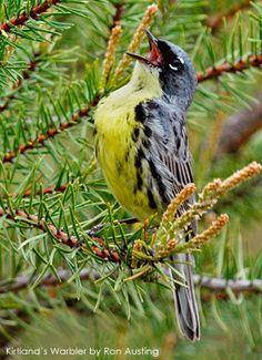 Bird Conservation Groups Announce Intention to Sue Over Ohio Wind Turbine in Key Bird Migration Corridor » Focusing on Wildlife