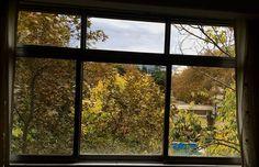 My home window #window#autmn#fall#nature#tehran#darous#daroos#iran#myhomewindow#photo#phtography#photographer#autmn #autumn #autmncolors #fall#mywiew#thr