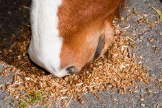 Glutengevoeligheid bij paarden + herken symptomen - Paardvisie.nl