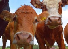 Here's Why Even Organic Farms Are Awful For Animals -- And How They Can Be Improved