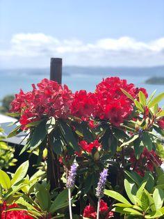 Musa, Plants, Photography, Hydrangeas, Photograph, Photography Business, Flora, Photoshoot, Fotografie
