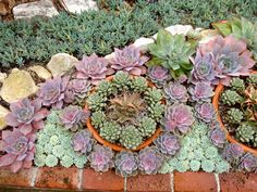 Instructions on how to create a xeriscape garden