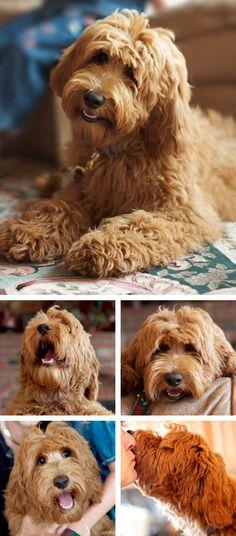 wat een prachtige hond!