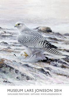 affisch2014web Animal Paintings, Bird Paintings, Birds Of Prey, Wildlife Art, Bird Art, Bird Feathers, Predator, Museum, Animals