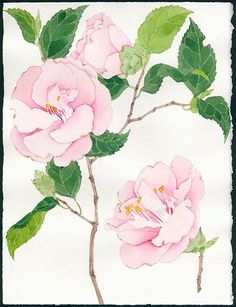 Габби Малпас - Camellia исследование