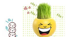 naughtygifts Office Home DIY Expression Grass Head Doll Purifying air Mini Potted Plants ** Click image to review more details.