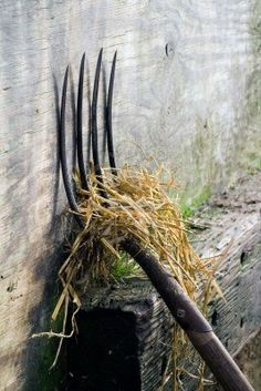 A pitch fork with straw leaning against a wall.  I've certainly used one if these a lot.